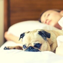 sleep can boost immune system